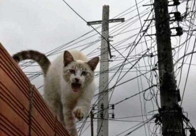 Morador de casa de luxo é preso suspeito de fazer 'gato' de energia elétrica em Palmas